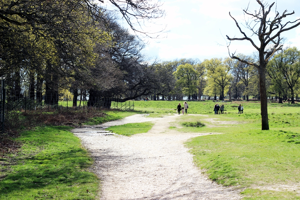 Richmond-Park-London-0597