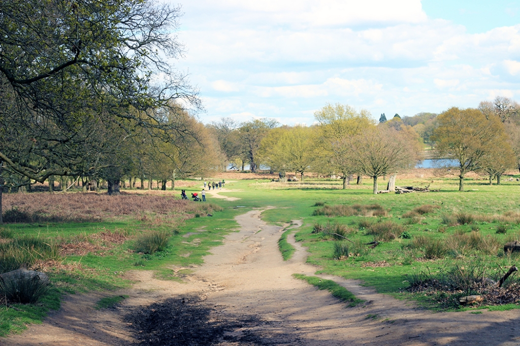 Richmond-Park-London-0501
